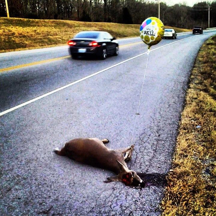 dead-roadkill-2