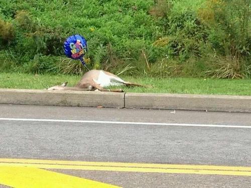 dead-roadkill-3