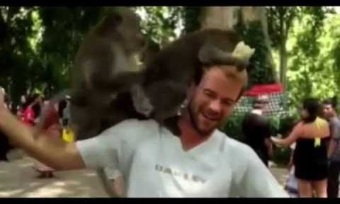 Monkeys doin' it on a tourist's head